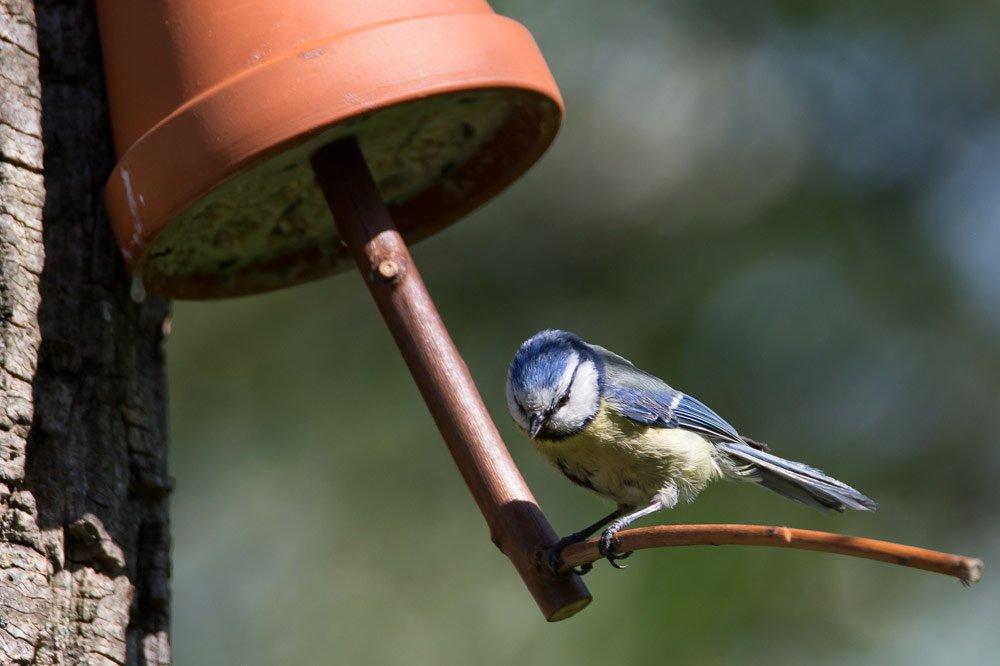 Vogelfutterhaus aus Tontopf basteln – So einfach geht's