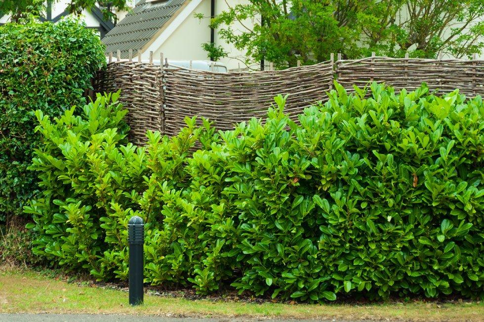 Sichtschutz im Garten: 22 raffinierte Ideen & Anregungen - Teil 6