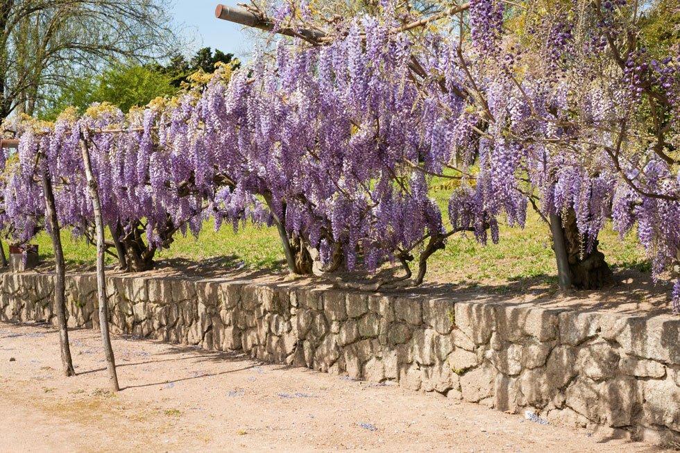 Sichtschutz im Garten: 22 raffinierte Ideen & Anregungen ...