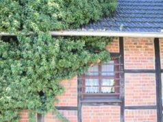 Fassadenbegrünung mit Hopfen