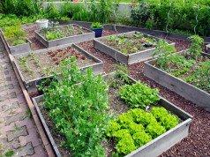 Gemüse-Kräutergarten-Kombination