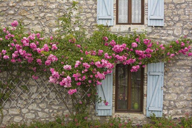 Rosen Im Fruhjahr Schneiden So Wird S Gemacht