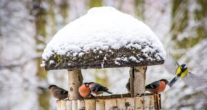 Vogelfutterhaus aufstellen