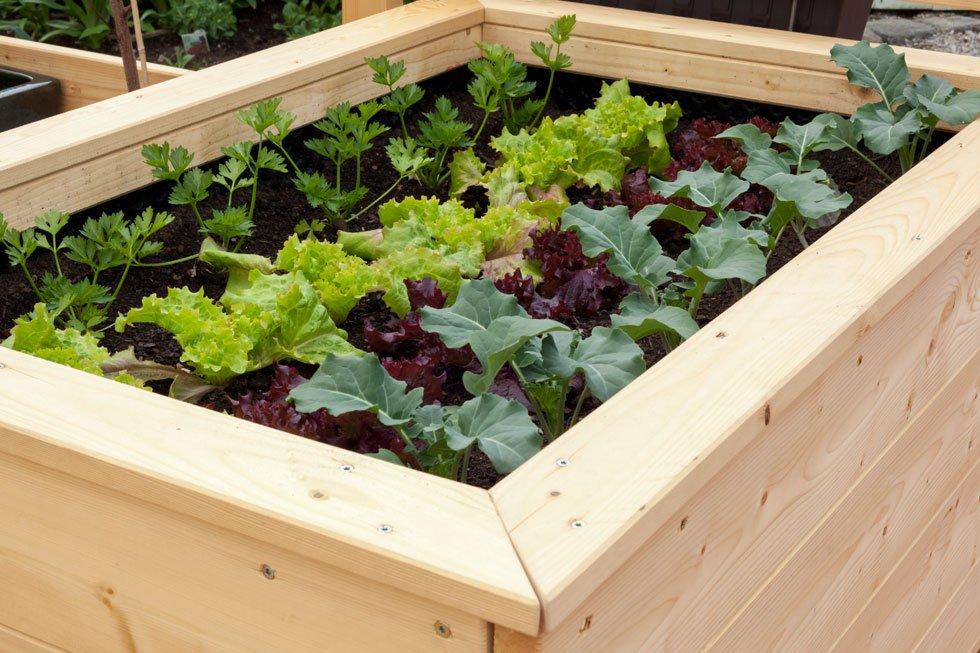 15 ideen hochbeet aus holz stein oder metall for Gartenbeet modern