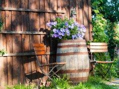 Weinfass als Pflanzgefäß