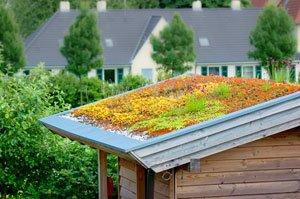 Grüne dachpappe