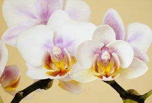 Die richtige Zimmerpflanze finden – Jede Pflanze hat ihre eigenen Bedürfnisse