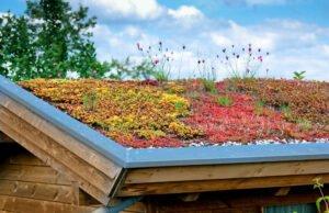 Gartenhausdach begrünen