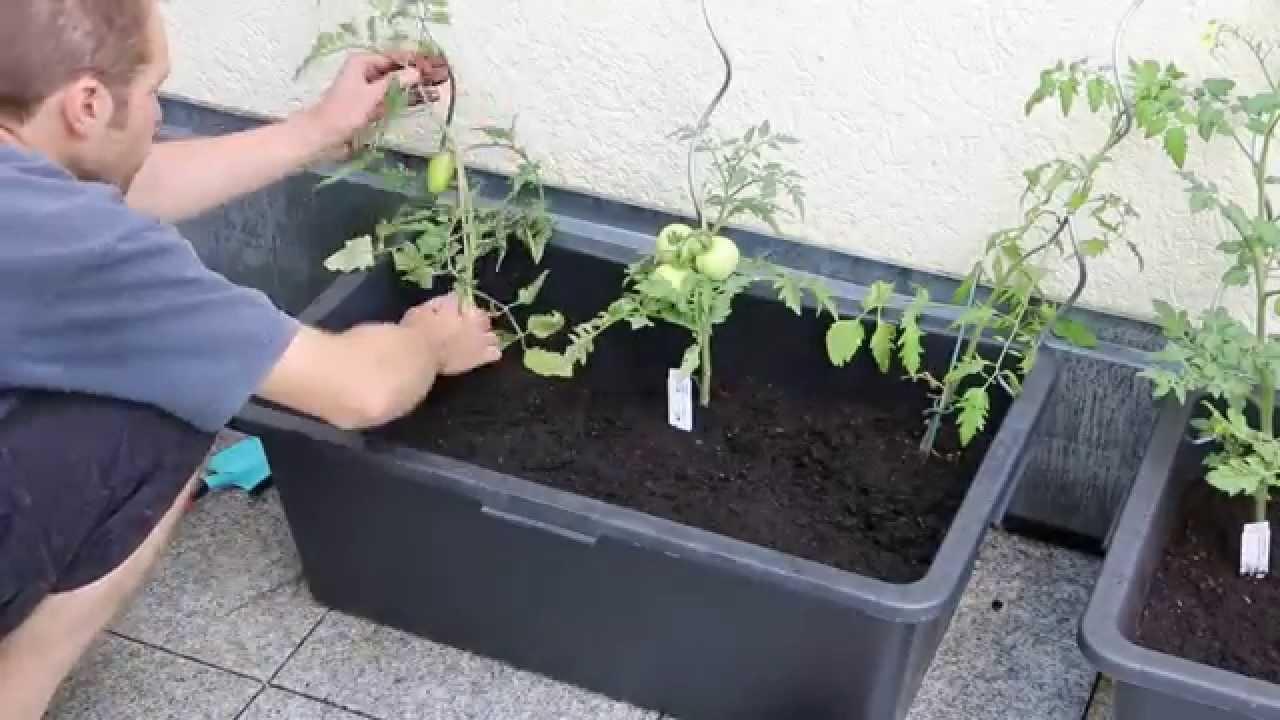 tomatenk bel aus m rtelkasten selber bauen eine reiche ernte auf kleinem platz. Black Bedroom Furniture Sets. Home Design Ideas