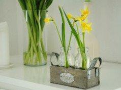 narzissen umpflanzen so gedeihen sie auch am neuen standort pr chtig. Black Bedroom Furniture Sets. Home Design Ideas