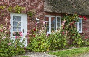 Stockrosen überwintern – So bringen Sie die Pflanze unbeschadet durch die kalte Jahreszeit