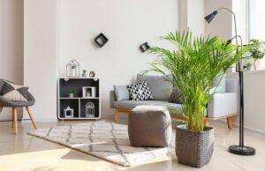 Zimmerpflanzen für den Sommer
