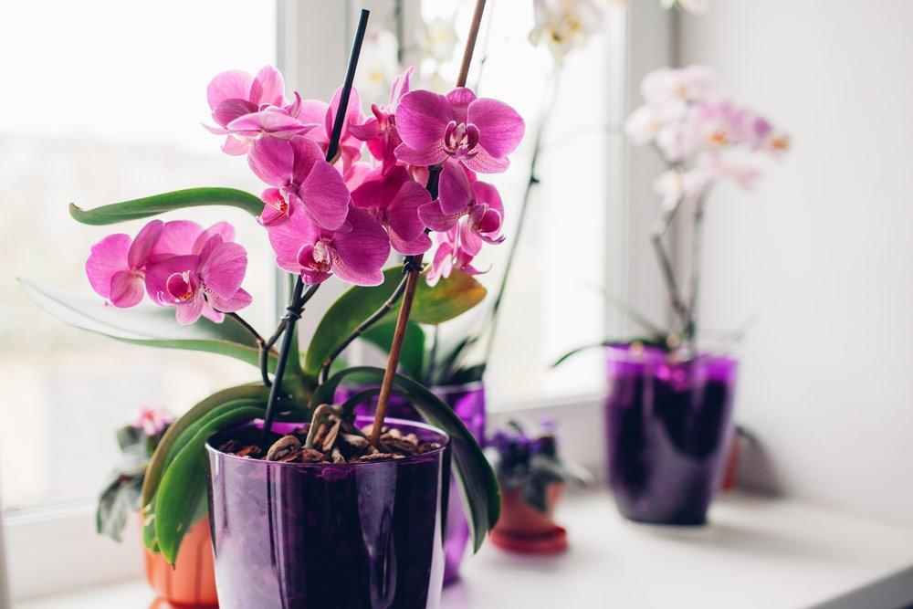 Zimmerpflanzen für den Sommer: Orchideen