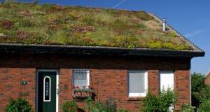 Extensive Dachbegrünung