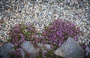 Kräuter im Steingarten anbauen - mit den richtigen Kräutern kein Problem