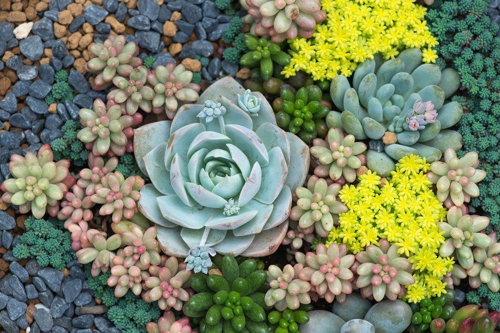 extensive dachbegr nung aufbau geeignete pflanzen f r ein bl hendes gr ndach vorgestellt. Black Bedroom Furniture Sets. Home Design Ideas