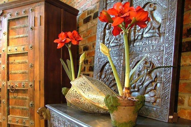 26 absolut pflegeleichte zimmerpflanzen f r anf nger. Black Bedroom Furniture Sets. Home Design Ideas