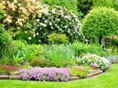 Baum unterpflanzen - Tipps und geeignete Pflanzen