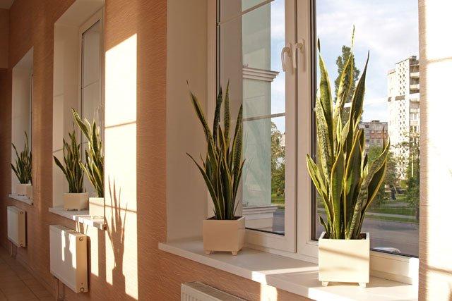 26 Absolut Pflegeleichte Zimmerpflanzen Fur Anfanger