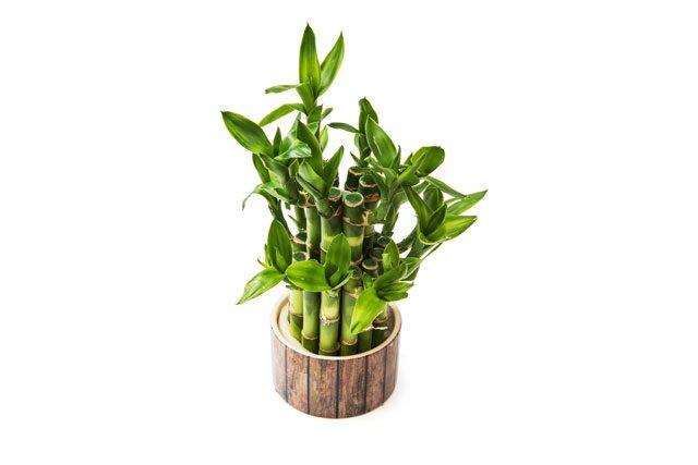 26 absolut pflegeleichte zimmerpflanzen f r anf nger - Zimmerpflanzen sonniger standort ...