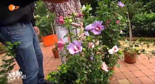 Tipps f r deinen garten for Garten tipps