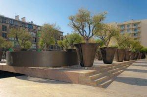 Olivenbaum im Topf pflegen - So versorgen Sie ihre mediterrane Pflanze richtig