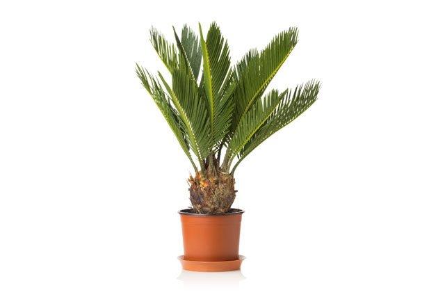 Zimmerpflanze Pflegeleicht 26 absolut pflegeleichte zimmerpflanzen für anfänger