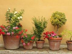 winterharte topfpflanzen welche pflanzen sind winterhart. Black Bedroom Furniture Sets. Home Design Ideas