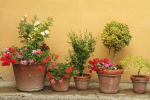 Viele Topfpflanzen sind recht pflegeleicht