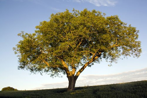 walnussbaum pflanzen so schaffen sie die optimalen bedingungen f r den m chtigen baum. Black Bedroom Furniture Sets. Home Design Ideas