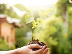 Walnussbaum vermehren