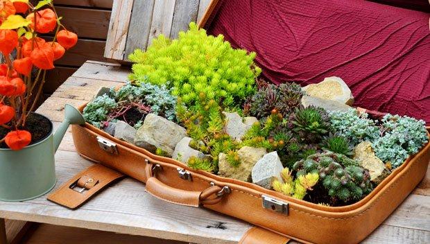 Garten herbstlich gestalten - Koffer bepflanzen