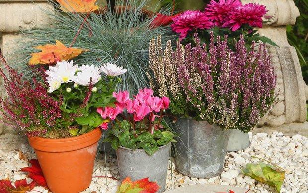 Garten herbstlich gestalten 6 schnell umsetzbare dekoideen for Garten im herbst gestalten