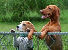 Garten hundesicher machen -