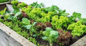 Hochbeet im Herbst anpflanzen - So können Sie eigenes Gemüse bis in den Winter genießen