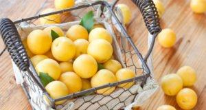 Mirabellen vermehren - So klappt's mit Kernen und Wurzelauslegern