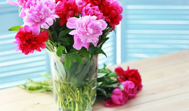 Schnittblumen länger frisch halten - Blätter abschneiden