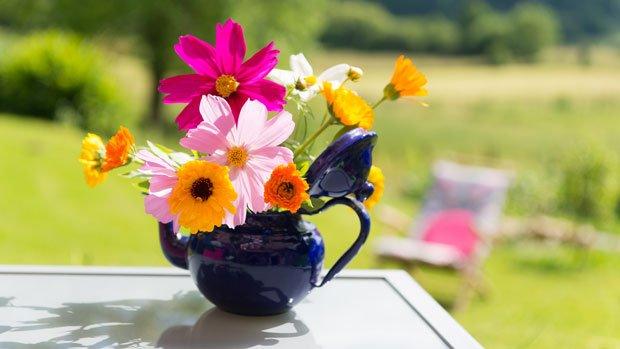 schnittblumen länger haltbar - Nährstoffe zugeben