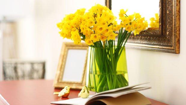 Schnittblumen länger haltbar - Narzissen