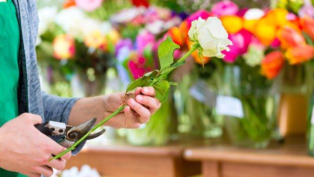 Schnittblumen länger frisch halten - Rückschnitt