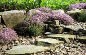 Steingarten mit Kräutern anlegen