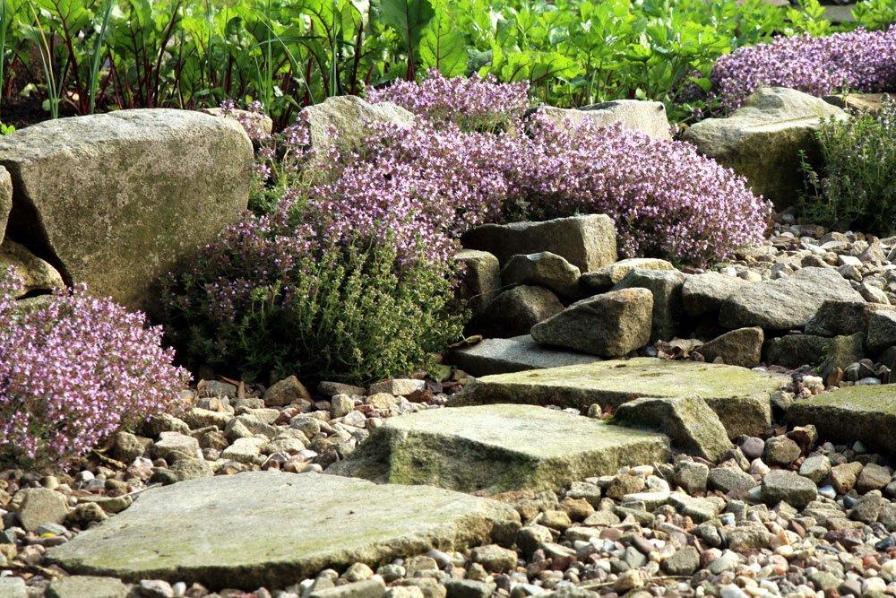 Kräuter im Steingarten: Tipps zur Kräuterauswahl und geeigneten