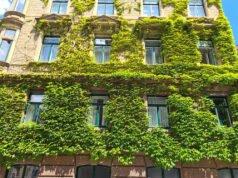 Fassade begrünen mit Efeu