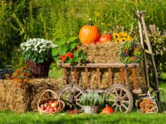 Garten herbstlich gestalten