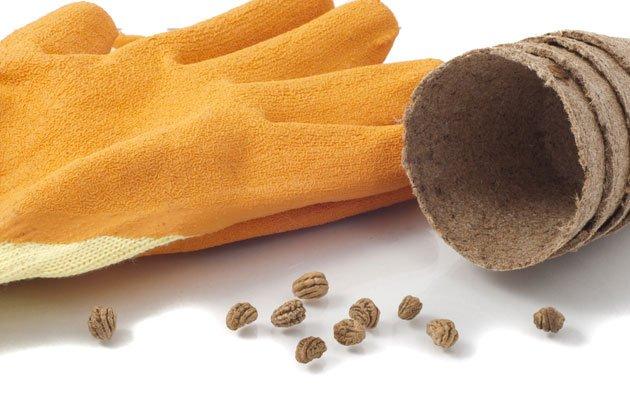 Kapuzinerkresse vorziehen