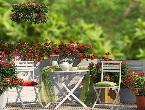 Gemüse auf dem balkon pflanzen – 9 gemüsesorten für anfänger ...