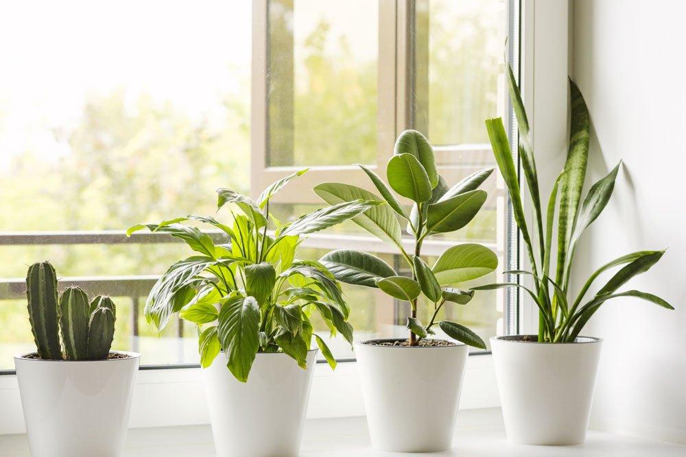 Pflegeleichte Topfpflanzen