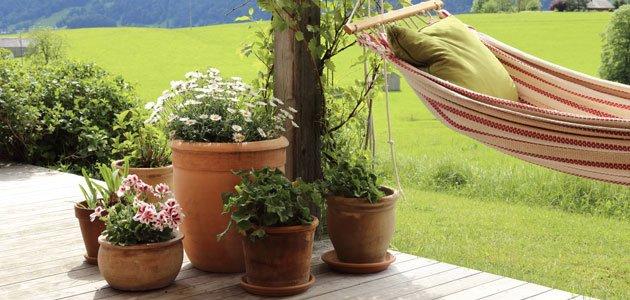 kakibaum pflanzen schritt f r schritt anleitung. Black Bedroom Furniture Sets. Home Design Ideas