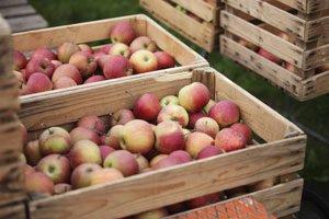 Äpfel lagern Kiste