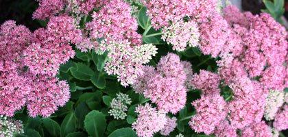 Blumenbeet Herbstblüher